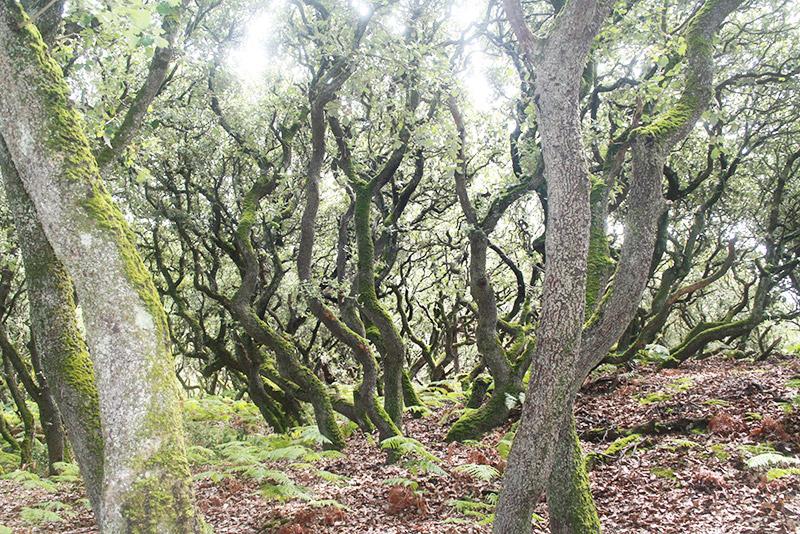 La forêt de Blanche Neige
