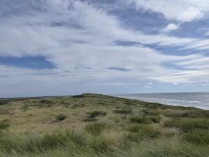 Dunes de Zaandvoort 3