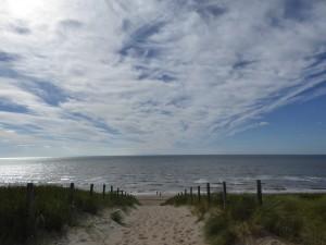 Dunes de Zaandvoort 1