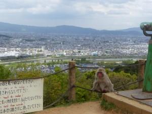 Les singes veillent, Arashiyama, Kyoto